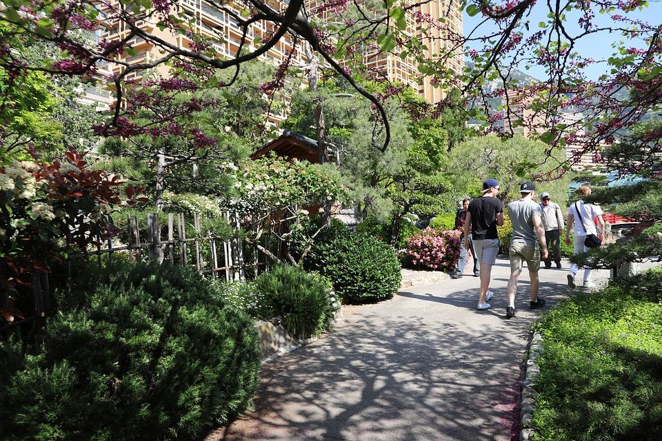 arbre jardin